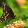 Our Garden_Butterfly