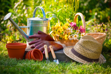 Vegetable Gardening for Beginners @ Murray Hall