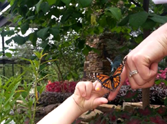 Butterfly Release @ Anderson Education Center & Purdy Butterfly House