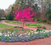 Living Tree $1,000 Located Garden Wide*