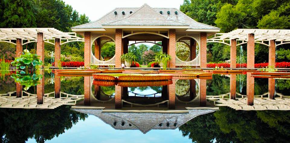 Our Garden_AquaticGarden