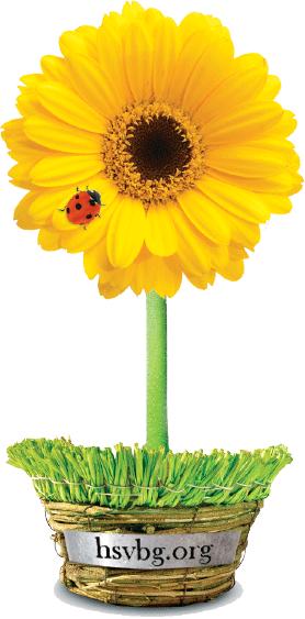 springplantsale-gerber-yellow