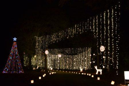 Galaxy Of Lights Huntsville Botanical Garden