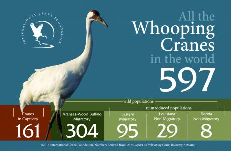 Whopping Crane Stats