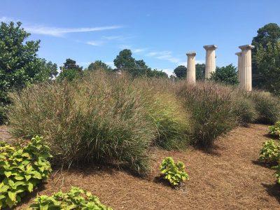 Ornamental grasses video huntsville botanical garden - Huntsville botanical gardens hours ...