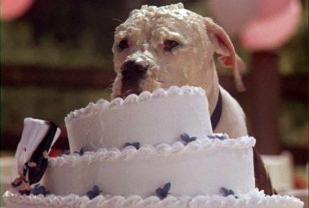 Dog eating wedding cake