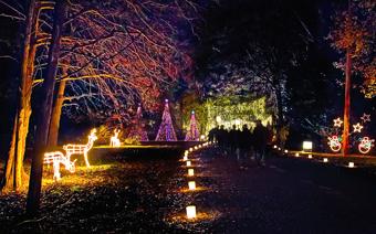 Galaxy of Lights: Walking Nights | Huntsville Botanical Garden