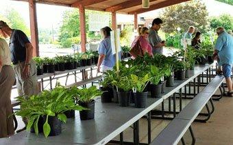 Hosta Sale Huntsville Botanical Garden